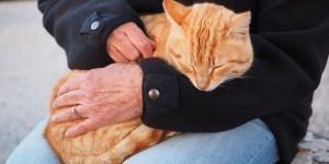cat-1090145_1280